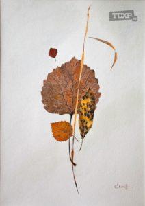 Скоков Евгений, Осенние листья
